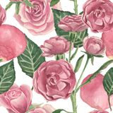 Watercolor pattern of roses and stems with leaves on a white background. Drawing for use in the wedding theme stock photography