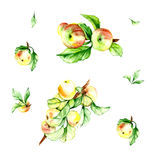 Watercolor  pattern set with apple Stock Photography