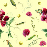 Watercolor pattern with sweet pea and green peas. Stock Image