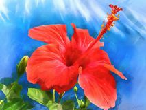 Watercolor pattern tropical flower hibiscus. Stock Images