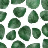 Watercolor pattern with tropical leaves isolated on white background. royalty free illustration