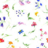 Watercolor pattern with wildflowers. Stock Photos