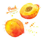Watercolor peach. Royalty Free Stock Photography