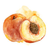 Watercolor peach illustration. Hand painted watercolor artistic peach illustration with decorative stain on white background Stock Photos