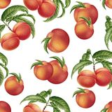 Watercolor peaches seamless pattern Royalty Free Stock Photography