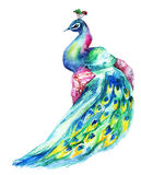 Watercolor Peacock Στοκ φωτογραφία με δικαίωμα ελεύθερης χρήσης