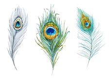Watercolor peacock feather set. Beautiful illustration with watercolor peacock feather set vector illustration