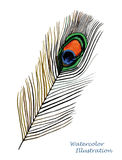 Watercolor peacock feather Royalty Free Stock Photography
