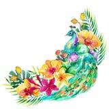 Watercolor peacock royalty free illustration