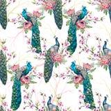 Watercolor peacock pattern Stock Image
