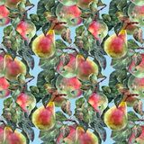 Watercolor pear with apple. Floral seamless pattern. Blue background. Watercolor pear apple branch background fruit handiwork design floral leaf  illustration Royalty Free Stock Image