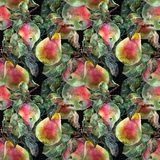 Watercolor pear with apple. Floral seamless pattern. Black background. Watercolor pear apple branch background fruit handiwork design floral leaf  illustration Royalty Free Stock Photo