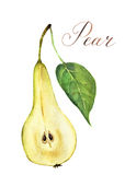 Watercolor pear cutaway. Botanical illustration. Stock Photography