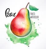 Watercolor pear Stock Photos