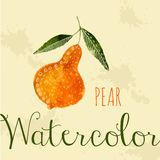 Watercolor pear hand drawn style card white ink Royalty Free Stock Image