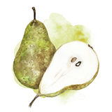 Watercolor pear illustration. Hand painted watercolor artistic pear illustration with decorative stain on white background Royalty Free Stock Photography