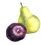 Watercolor pear and plum. Watercolor yellow pear and violet plum stock illustration