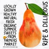 Watercolor pear Stock Image