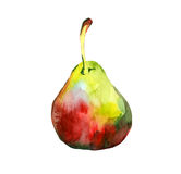 Watercolor pear. On white background Royalty Free Stock Photos