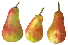 Watercolor pear on white Royalty Free Stock Photos