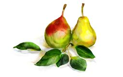Watercolor pears Royalty Free Stock Photos