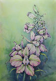 Watercolor and pencil flower. Hand drawn watercolor and pencil delphinium, macro Stock Image