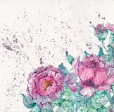 Watercolor peonies bouquet over beautiful background Royalty Free Stock Image
