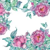 Watercolor peonies bouquet over white background Royalty Free Stock Images
