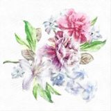 Watercolor Peony Clematis Hyacinth Illustration Floral Card With Flowers Royalty Free Stock Image