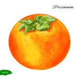 Watercolor Persimmon illustration  on white background, Hand drawn vector sketch, Vintage tropical organic Stock Photos