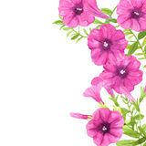 Watercolor petunias Stock Photo