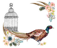 Watercolor pheasant card. Watercolor Swinhoe pheasant card. Hand painted illustration with Anemones, herbs, feathers, pheasant and bird cage Royalty Free Stock Images