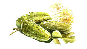 Watercolor pickles Stock Photography