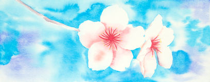 Watercolor picture of almond blossom Royalty Free Stock Image