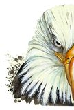 Watercolor picture of an animal genus of large birds of the hawk family, eagle, predator, portrait of an eagle, white eagle with Stock Photos