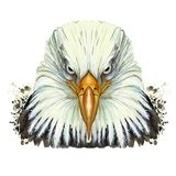 Watercolor picture of an animal genus of large birds of the hawk family, eagle, predator, portrait of an eagle, white eagle with a Stock Photos