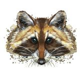Watercolor picture of an animal of the genus of predatory mammals of the raccoon family, raccoon raccoon, raccoon, raccoon portrai. T, raccoon head, fluffy wool royalty free illustration