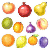 Watercolor picture of different fruits Stock Photo