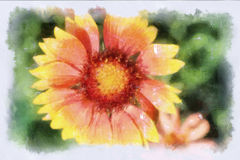 A watercolor picture of a flower Stock Image
