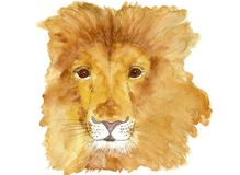 Watercolor picture of a majestic lion isolated on white. Royalty Free Stock Photography