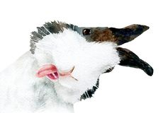 Watercolor Picture Of A Curious Rabbit Royalty Free Stock Photos