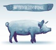 Watercolor pig Royalty Free Stock Photos