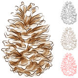Watercolor Pine Cone Stock Photos