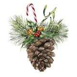 Watercolor pine cone with holiday decor. Hand painted pine cone with christmas tree branch, bells, candy, holly and. Mistletoe isolated on white background for Royalty Free Stock Photos