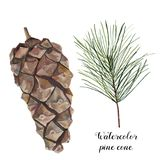 Watercolor pine cone set. Hand painted pine branch with cone isolated on white background. Botanical clip art for design. Or print. Holiday plant Stock Photos