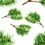 Watercolor pine set on white background. 2 Royalty Free Stock Images