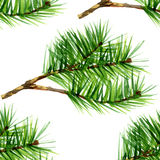 Watercolor pine set on white background. 1 Stock Photos