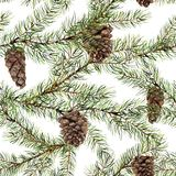 Watercolor pine tree seamless pattern. Hand painted fir branch with pine cone isolated on white background. Botanical Stock Photos