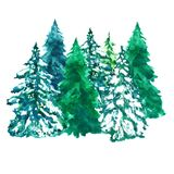 Watercolor pine trees illustration, isolated on white background royalty free stock photos