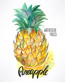 Watercolor pineapple Stock Photography